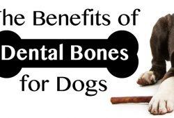 Dental Bones for Dogs